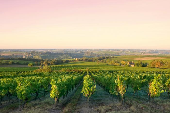 Buying a vineyard in Burgundy is akin to buying a great work of art.