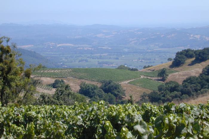The Sonoma Valley, among others, is threatened by drought / Credit: Hohensee