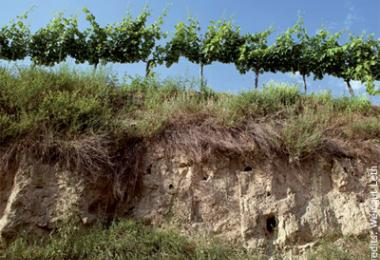 The Leth Estate - Loess and passion for Veltliner