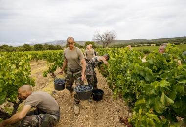 Former members of the French Foreign Legion at work in the vineyard.