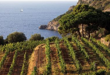 Vineyards in Cala Grande, Monte Argentario