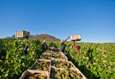 South Africa's wine harvest is just a few weeks ahead and a pressure to full cellars, source: WOSA/Alain Proust