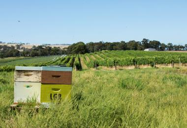Diverse flora and fauna are particularly important for vineyard health, for example with bee boxes next to the vines as shown here in the Yangarra Estate Vineyard in McLaren Vale in Australia. / Credit: Randy Larcombe - Wine Australia