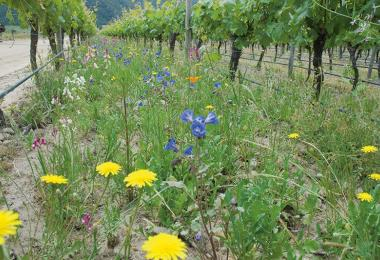 Biodiversity in the vineyard